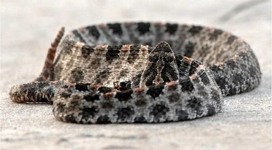Científicos explican cómo perdieron sus extremidades las serpientes