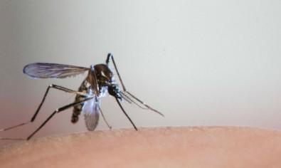 Dengue pode gerar imunidade contra Zika