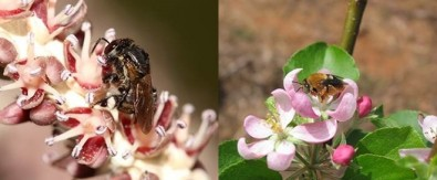 Pollination is threatened by deforestation and agrochemicals in Brazil