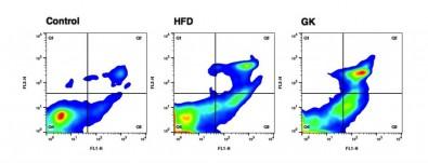 Alteraciones celulares aumentan la propensión de obesos y diabéticos a contraer infecciones