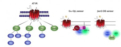Biosensors make new approaches to drug discovery possible
