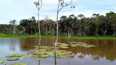 Microrganismos são os maiores emissores de carbono em águas da Amazônia
