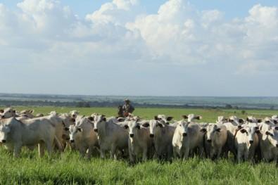 Integração entre lavoura e gado aumenta rentabilidade e diminui emissões