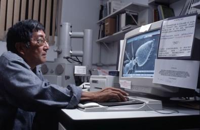 Nova família de vírus ganha nome de professor da Esalq-USP