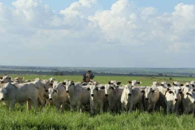 Crop-livestock integration boosts profitability and reduces emissions
