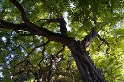 La contaminación del aire perjudica el crecimiento de los árboles en São Paulo