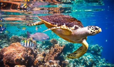 La extinción de especies aumenta a un ritmo sin precedentes, se advierte en el informe del IPBES