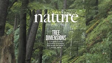 Mudança climática pode alterar relações simbióticas entre microrganismos e árvores