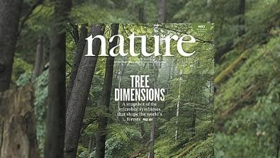 El cambio climático puede alterar las relaciones simbióticas entre microorganismos y árboles
