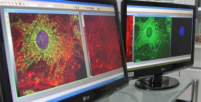 Genetically modified virus combats prostate cancer