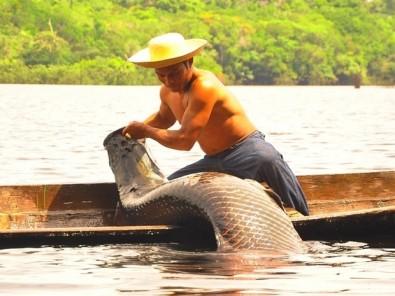 Descubren genes relacionados con la diferenciación sexual en un pez amazónico gigante