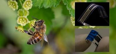 Sensor usa molécula do ferrão de abelha para detectar bactérias em alimentos e bebidas
