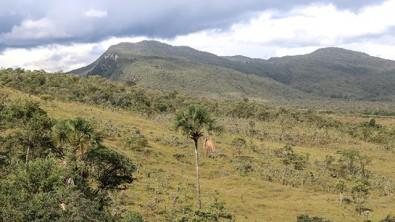 Moratória da soja precisa ser estendida para o Cerrado, defendem pesquisadores