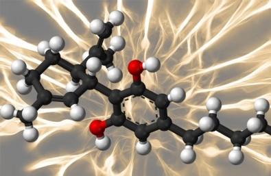 Cannabidiol reduces aggressiveness, study concludes