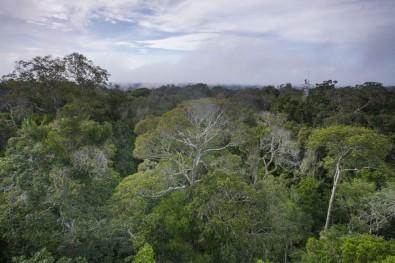 Falta de fósforo pode afetar reação da floresta amazônica às mudanças do clima