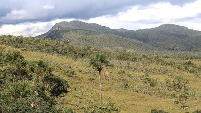 La moratoria de la soja debe extenderse a la sabana brasileña, afirman científicos