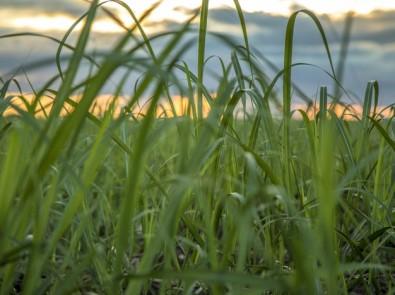 Bioenergia pode ajudar a mitigar as mudanças climáticas, reconhece IPCC