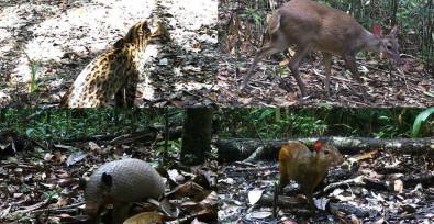 Estudo mensura impacto da agropecuária na dieta de mamíferos silvestres