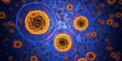 Pós-doutorado em bioquímica e biologia celular com bolsa da FAPESP