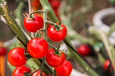 Pós-doutorado em desenvolvimento vegetal com bolsa da FAPESP