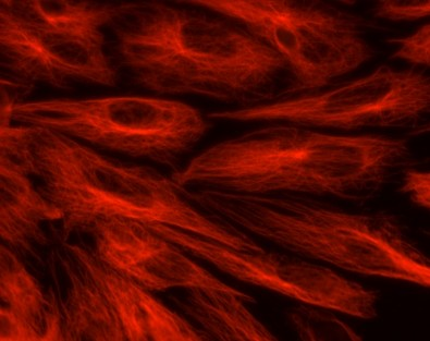 Researchers discover a link between two important products of nitric oxide