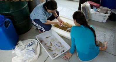 Riqueza de espécies de peixes na bacia amazônica segue padrão inesperado