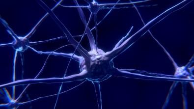 Pós-doutorado em neurofisiologia experimental com bolsa da FAPESP