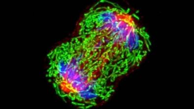 Pós-doutorado em biologia molecular com bolsa da FAPESP