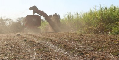 Study highlights the importance of managing the use of sugarcane straw to generate bioenergy