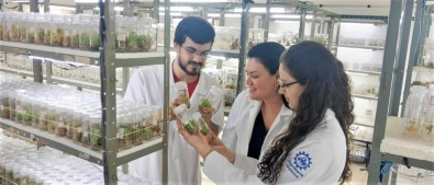 Study aims at boosting antitumoral activity of compound extracted from an Amazon plant