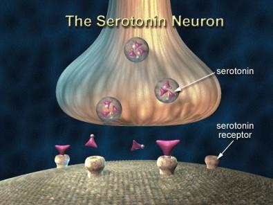 Serotonin inhibits sepsis-like severe systemic inflammation