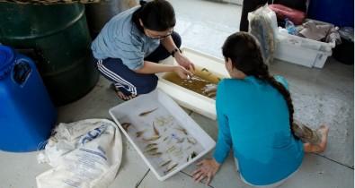 La riqueza de especies de peces en la cuenca amazónica sigue un patrón inesperado