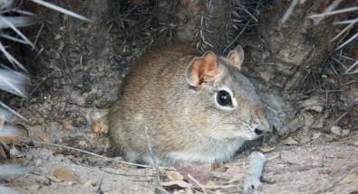Análise genética de vetor da doença de Chagas pode levar a novas estratégias de prevenção