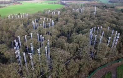 Experimentos tentam descobrir como florestas reagem ao aumento de CO<sub>2</sub> na atmosfera