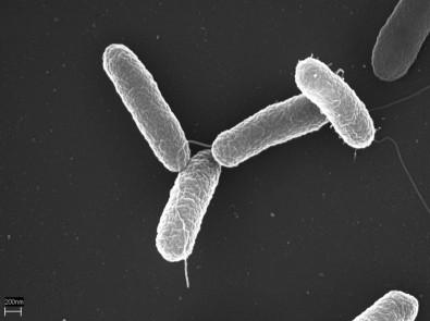 Vaga de mestrado em microbiologia é oferecida no ICB-USP