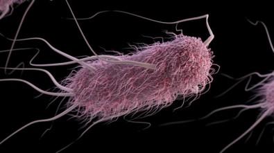 Pós-doutorado em biologia sintética na Unesp