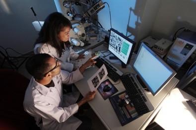 Doutorado direto em imunopatogênese da malária na Unicamp