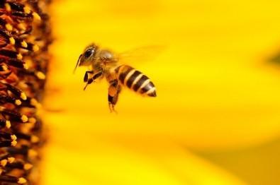 Pós-doutorado em ecotoxicologia e conservação de abelhas na UFSCar