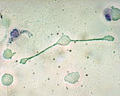 Doutorado Direto em imunometabolismo no Instituto de Biologia da Unicamp