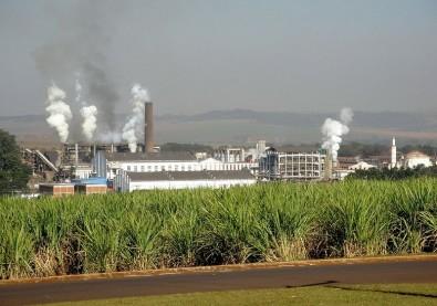 FAPESP and São Martinho set a center aimed at developing biological control technology for sugarcane