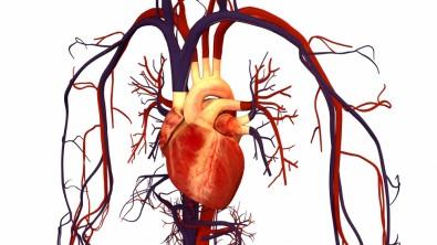 Estudo reforça caráter cardioprotetor da melatonina