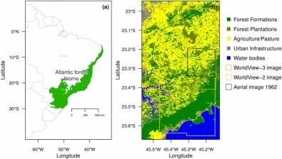 Investigan la regeneración de Bosque Atlántico en el estado de São Paulo