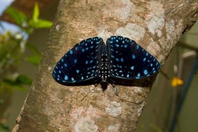 Mapeamento de borboletas na Mata Atlântica identifica áreas prioritárias para conservação