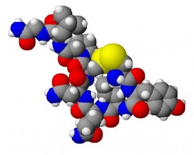 Ocitocina pode prevenir surgimento de osteoporose