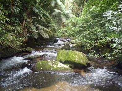 Comunidades pequenas de insetos respondem de maneira menos previsível às mudanças ambientais