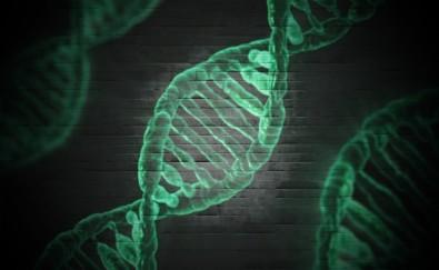 Pesquisadores investigam fatores genéticos de resistência ou suscetibilidade à COVID-19