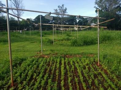 Seca favorece fungos fitopatogênicos e liberação de CO2 em solo de pastagem, aponta estudo