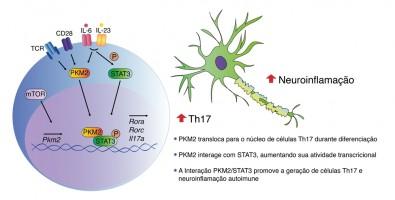 Estudo identifica enzima-chave para o desenvolvimento de doenças autoimunes