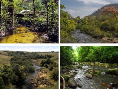 Estudo busca padrões de proteção da vegetação ribeirinha para evitar o colapso da biodiversidade aquática