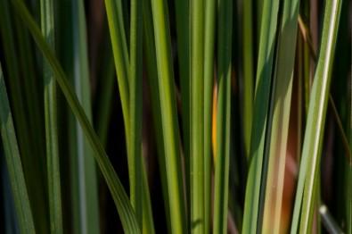 Los incentivos para la producción de bioenergía deben mantenerse tras la pandemia